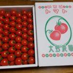 こんなに甘いトマトがあるなんて!大野さんの『いちごトマト』
